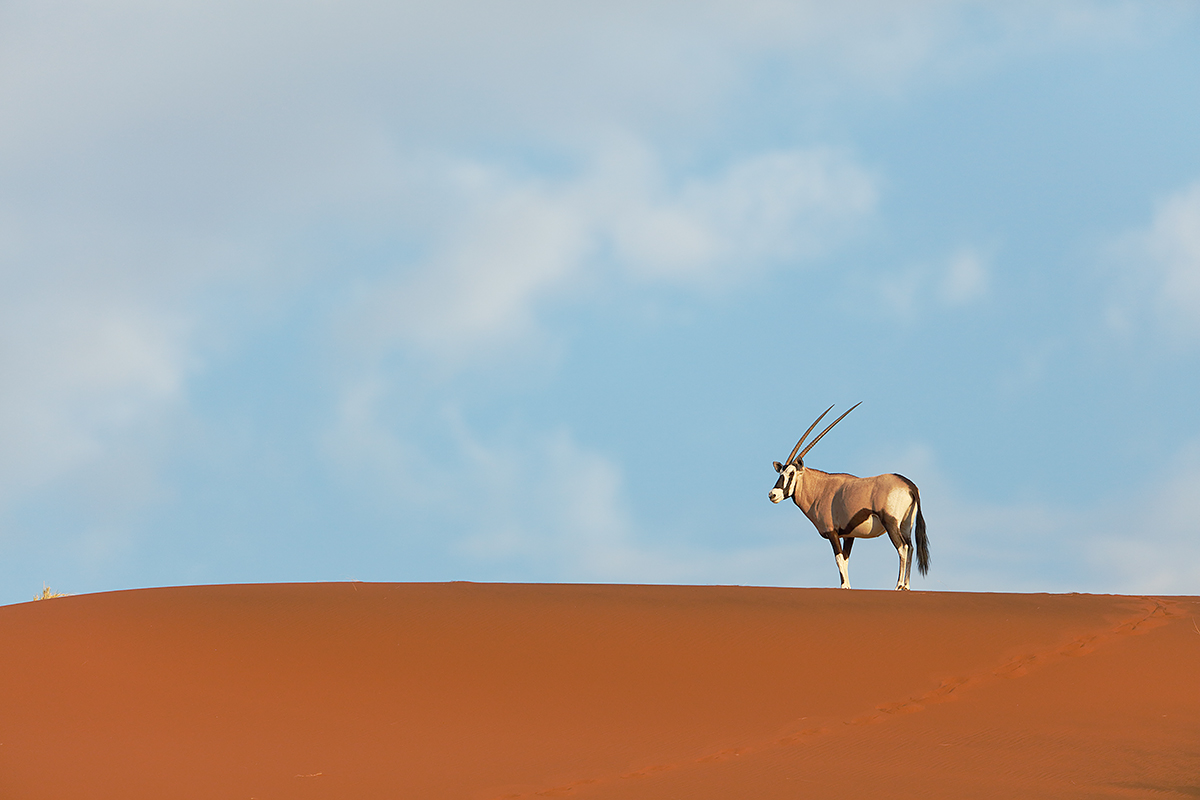 oryx-on-red-dune-_t0a2456-namib-naukluft-national-park-namibia