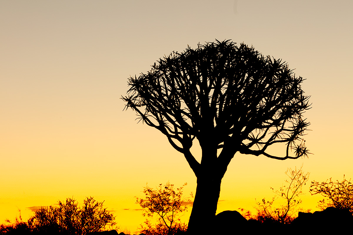 quiver-tree-at-sunset-_r7a0139-quiver-tree-forest-keetmanshoop-namibia