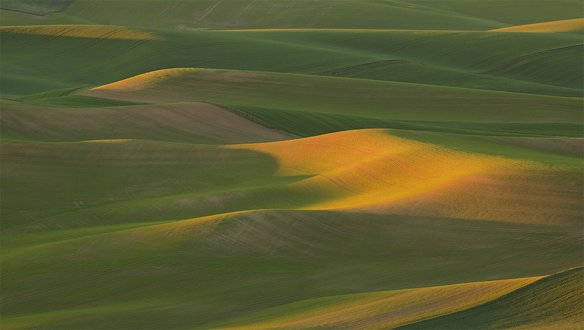 rolling-fields-darker-early-morning-ligth-textures-_a1c6224-palouse-waE