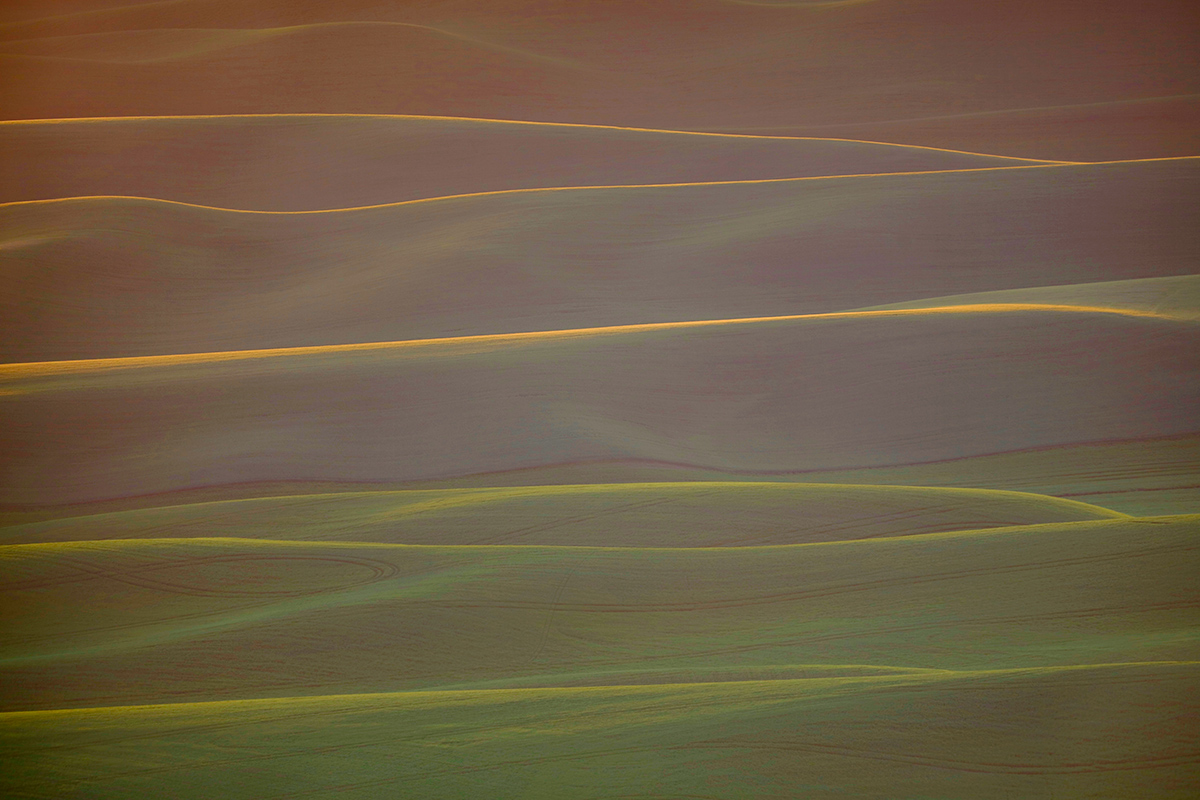 rolling-green-hills-backlit-_t0a9330the-palouse-wa