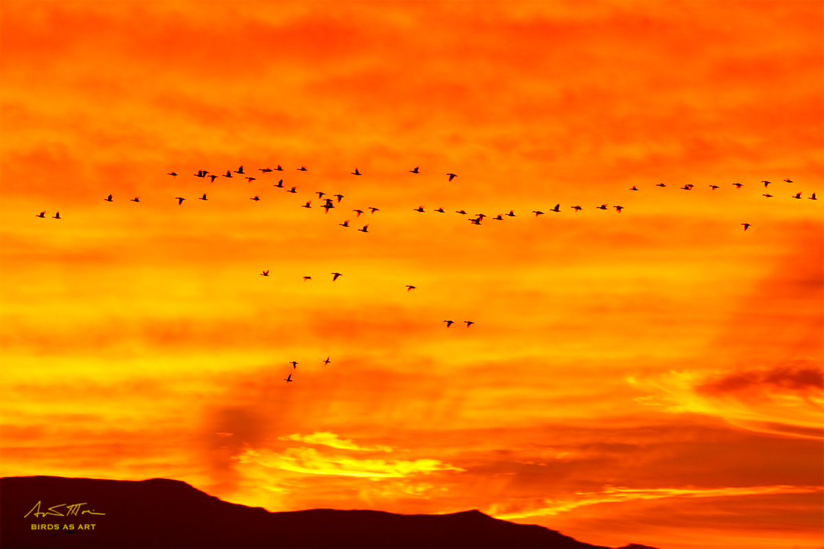 small-flock-of-geese-sign-through-mega-sunrise-1-30-sec-6r7a0024-bosque-del-apache-nwr-san-antonio-nm