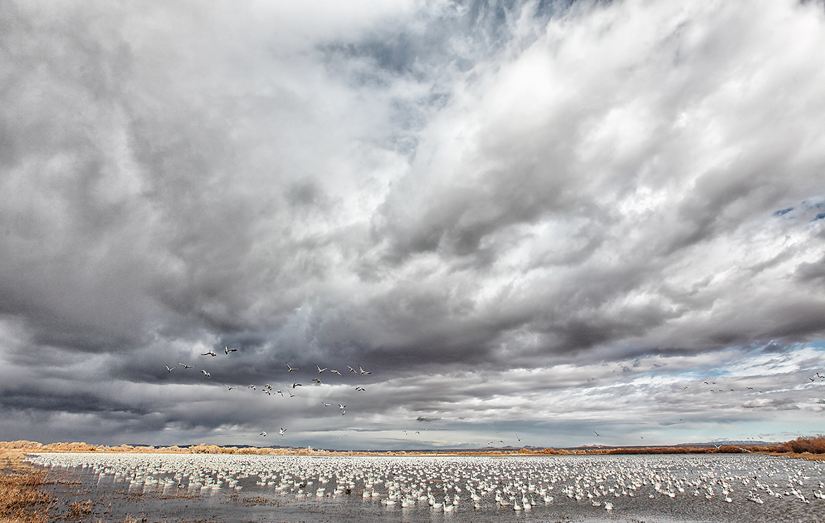 snow-geese-in-main-impoundment-stormy-sky-_mg_9045-bosque-del-apache-nwr-san-antonio-nm