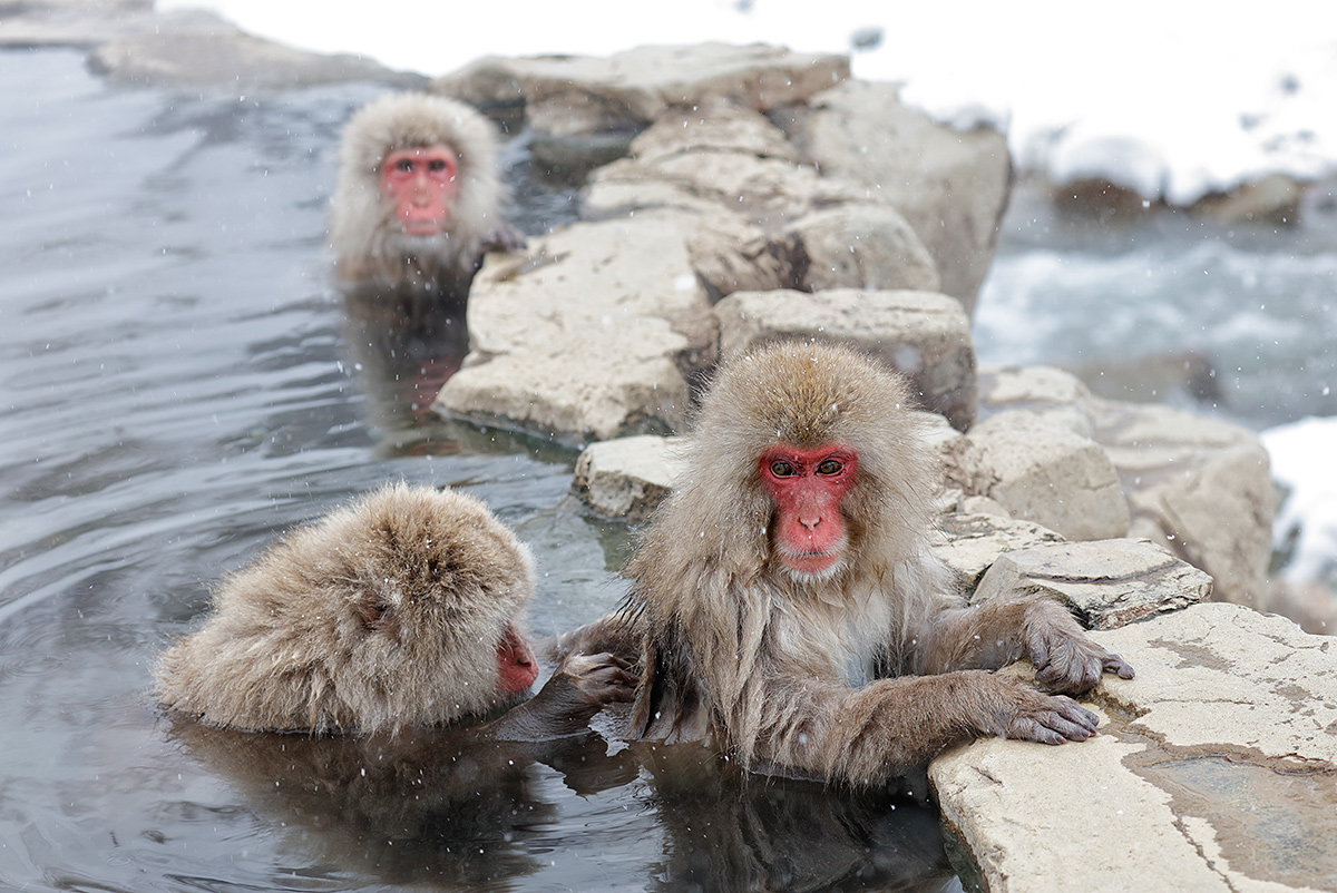snow-monkeys-grooming-_r7a8797-nagano-japan