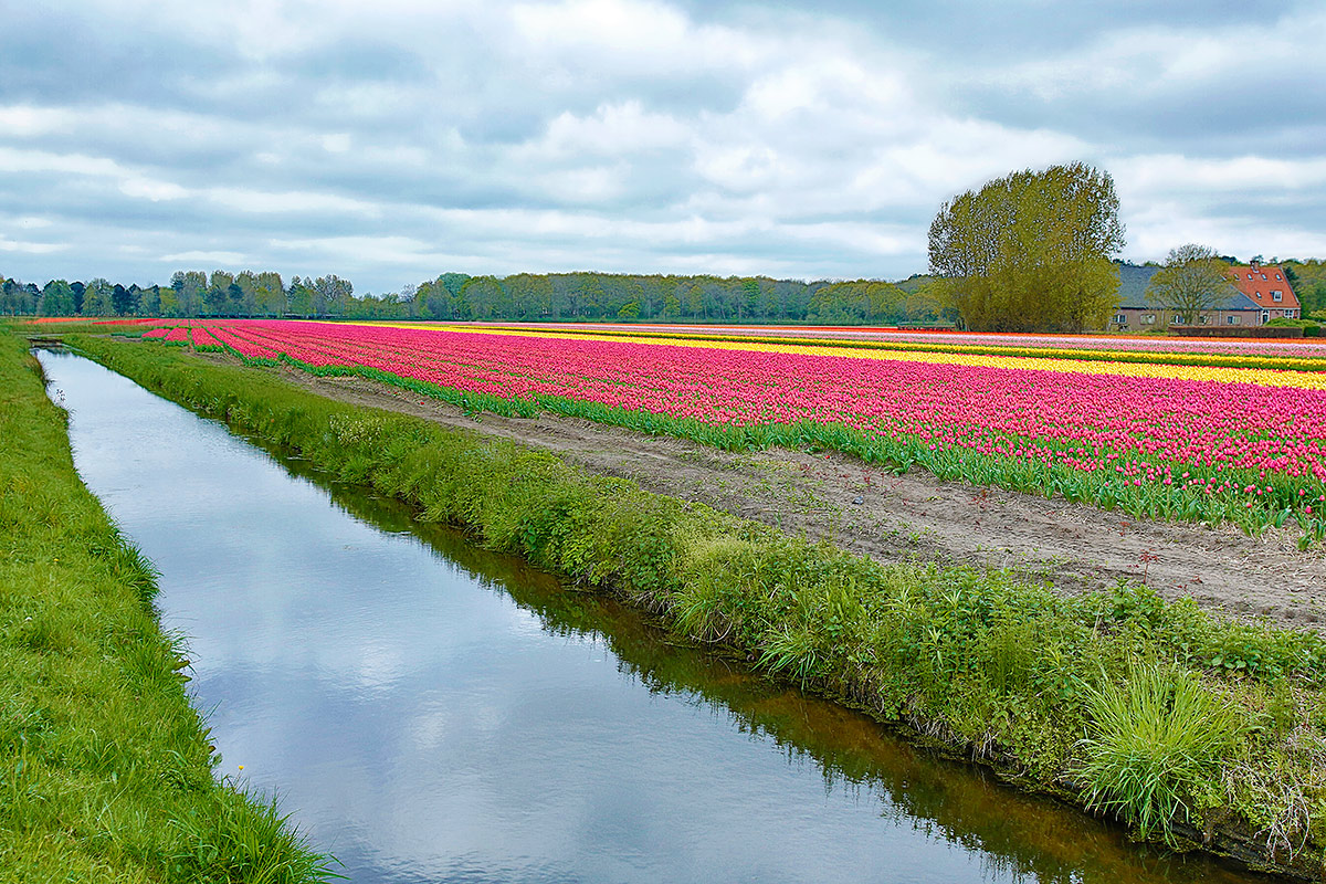 tulip-fields-and-farm-house-vibr-_a1c4674-keukenhof-lisse-holland