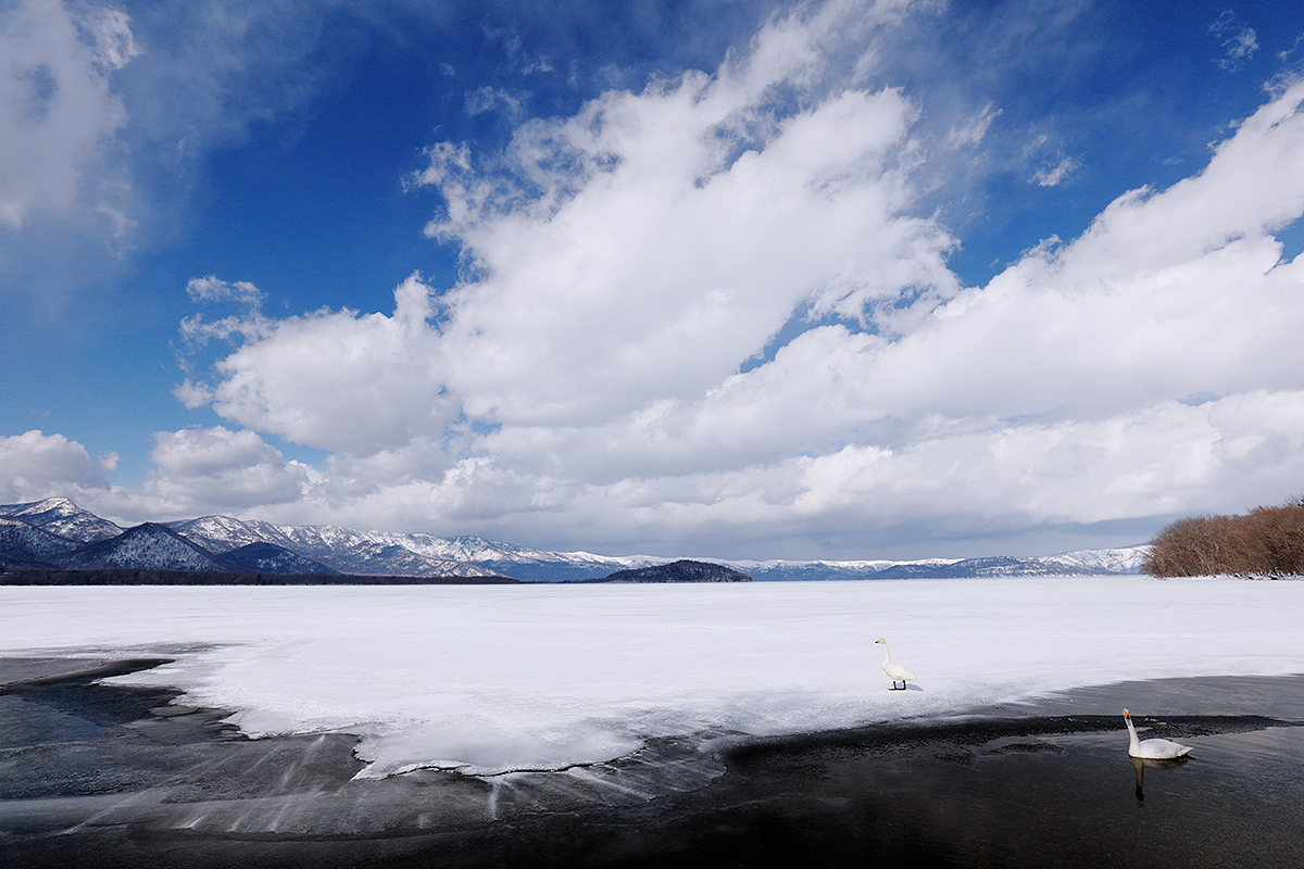 whooper-swans-on-frozen-lake-with-big-white-clouds-_r7a1168-lake-kusharo-hokkaido-japan