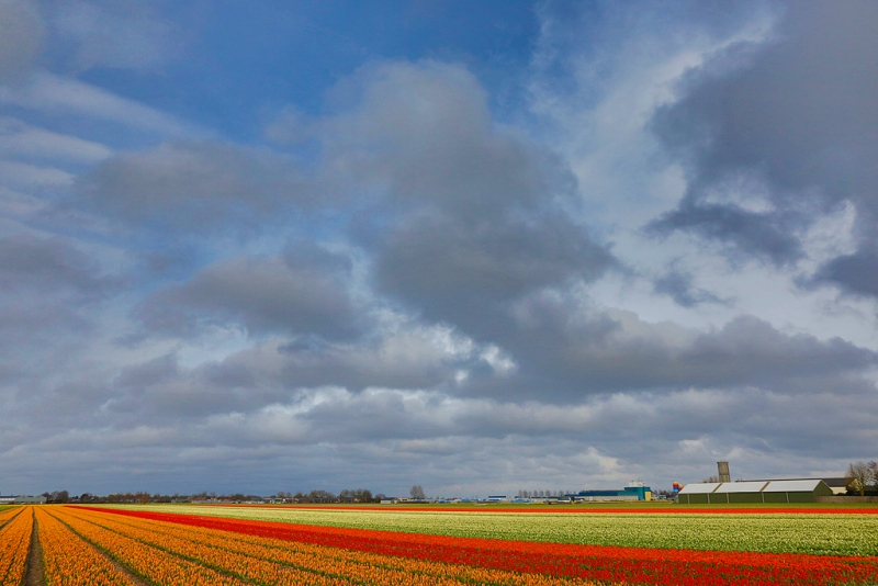 flower-field-hdr-_a1c8654-lisse-holland