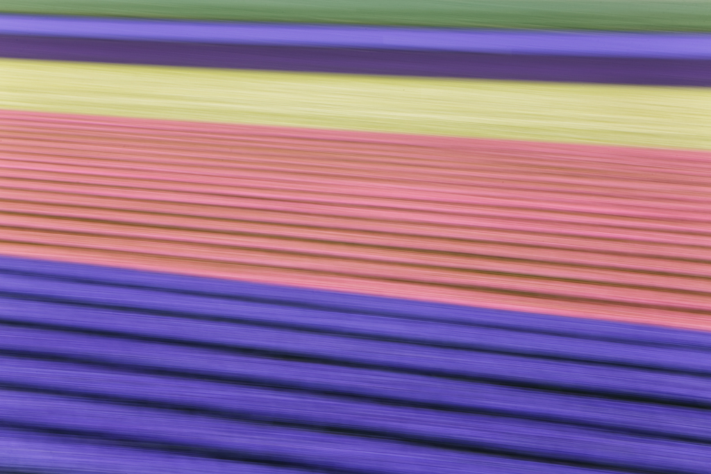 flower-field-blur-_a1c9897-noordwijk-holland
