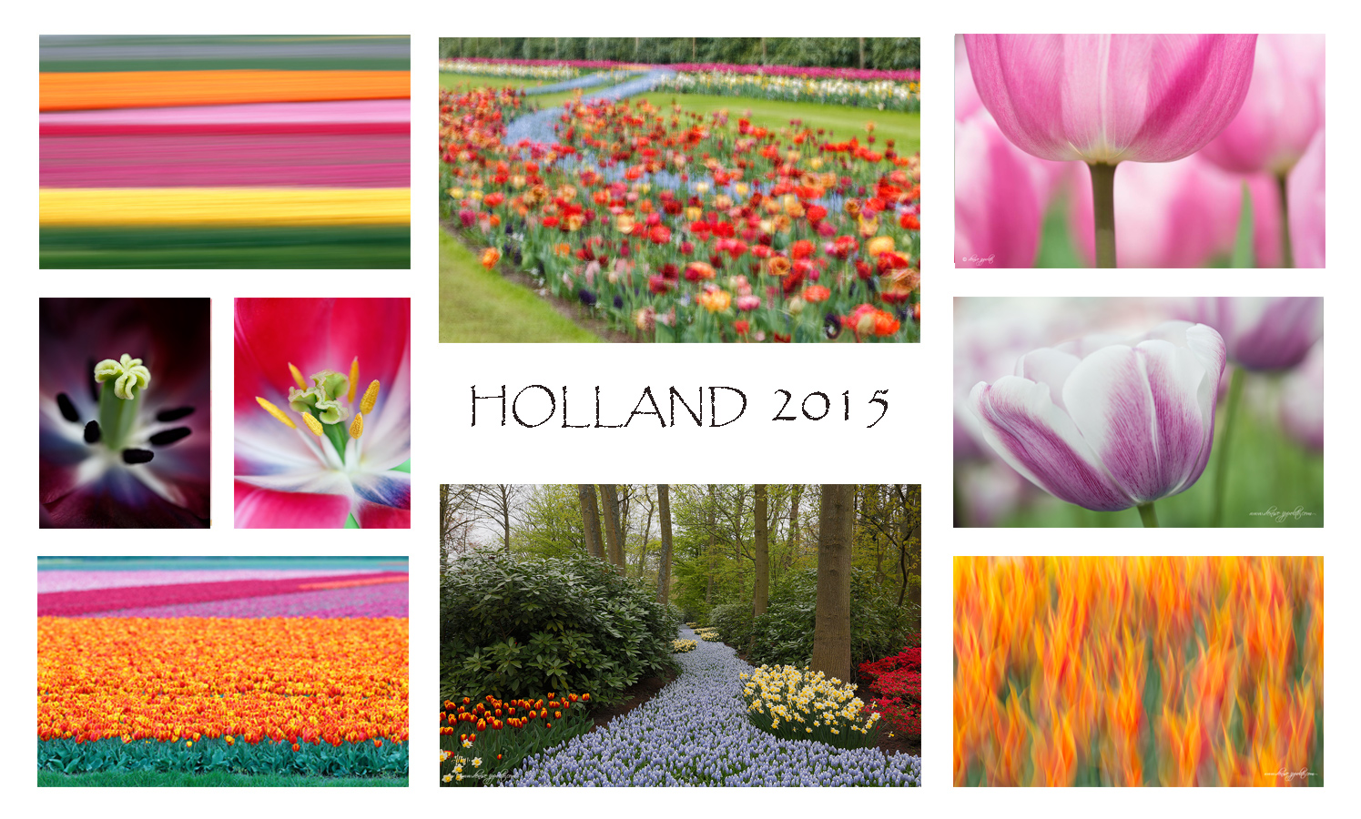 holland-2015-card