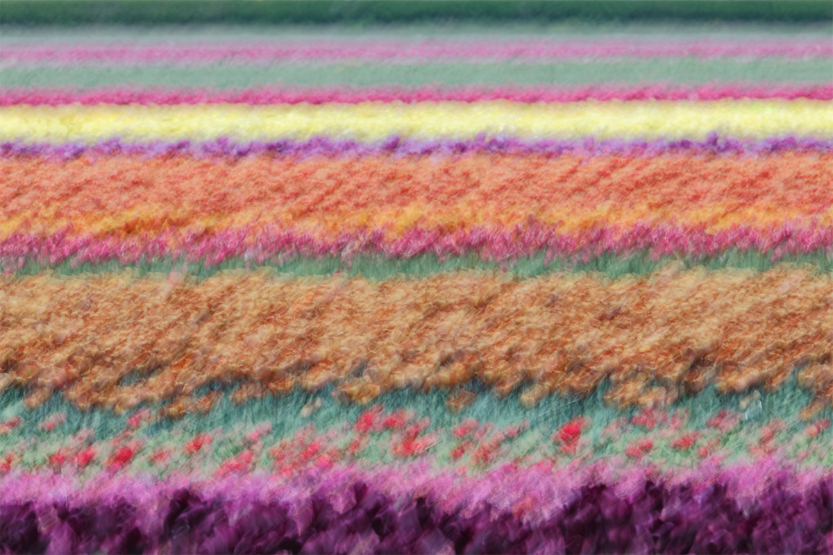 tulip-field-painterly-shake-blur-_a1c5075-keukenhof-lisse-holland
