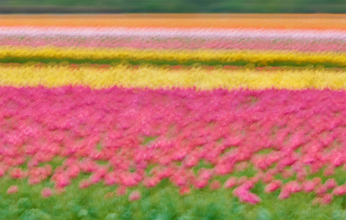 tulip-field-shake-and-bake-hdr-art-vivd-blur-_a1c4722-keukenhof-lisse-holland