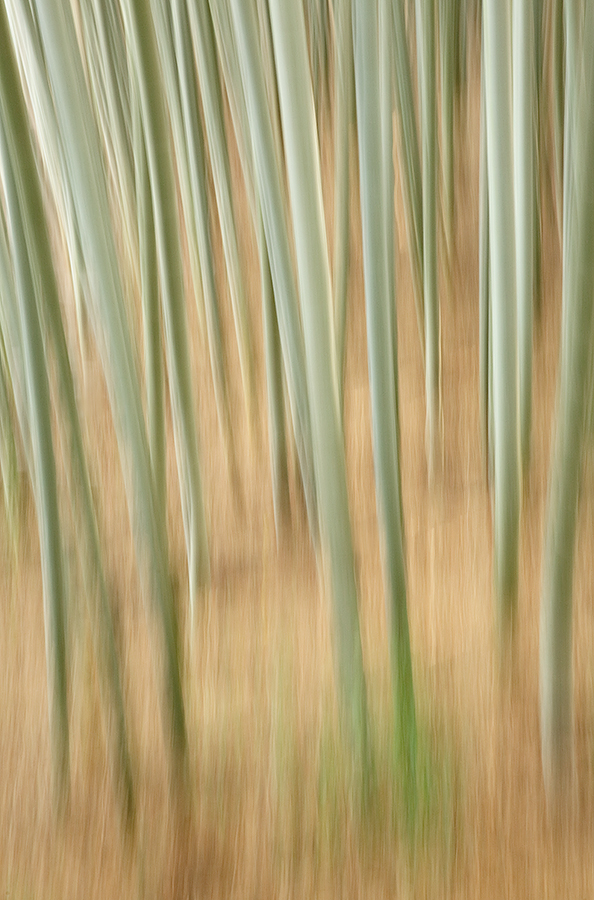 bamboo-vertical-pan-blur-_a1c8757-bamboo-forest-kyoto-japan