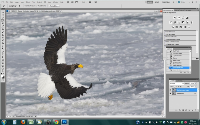stellers-sea-eagle-scr-capture