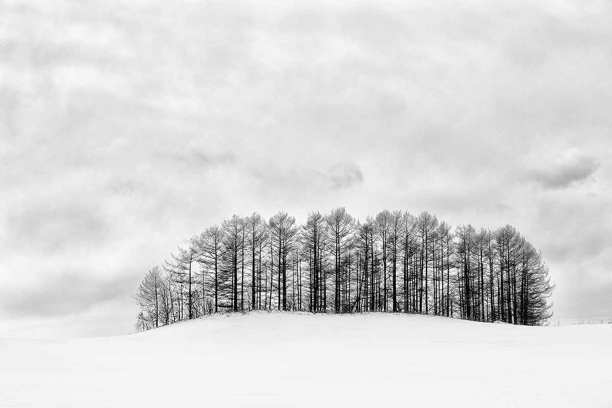 stand-of-trees-on-snowy-hill-_a1c4339-hokkaido-japan