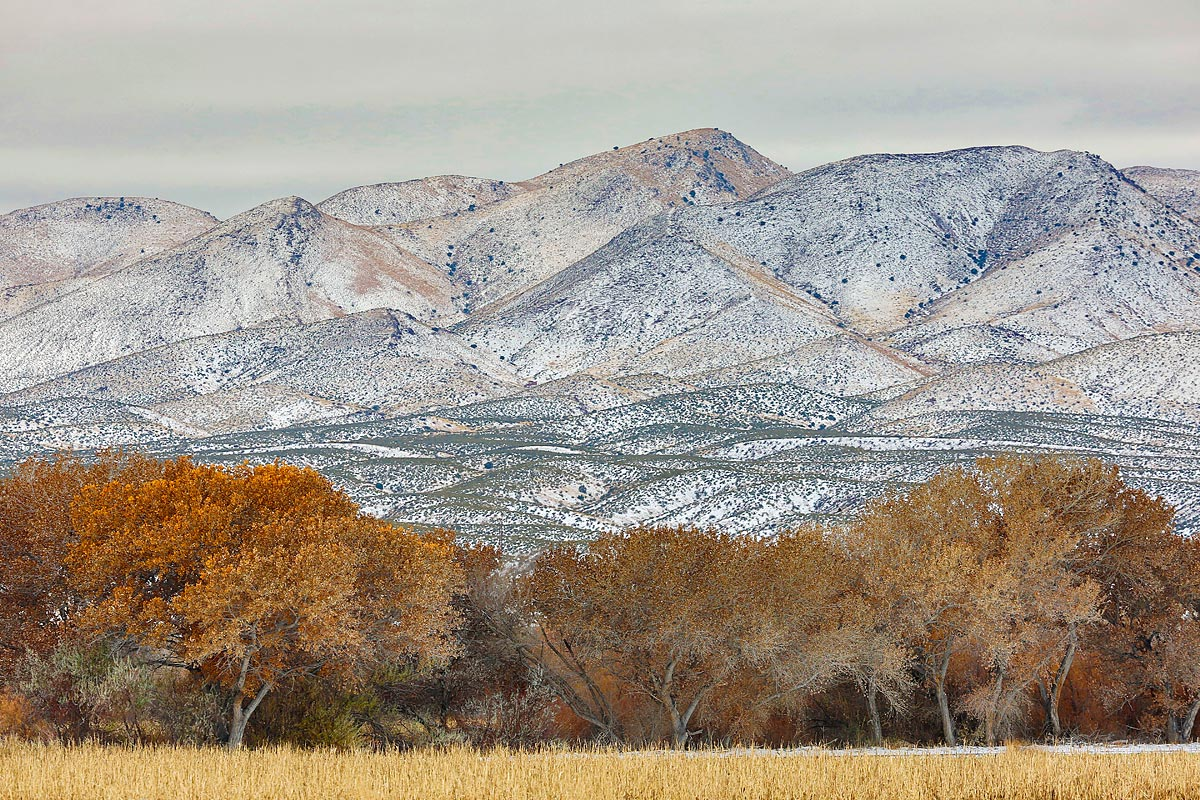 chupaderas-with-light-snowfall-_a1c0342-bosque-del-apache-nwr-san-antonio-nm