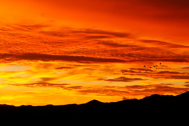 snow-geese-small-flock-spectacular-sunset-_w3c4562-bosque-del-apache-nwr-san-antonio-nm