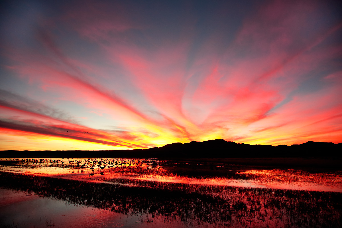 sunset-crane-pool-_a1c9973-bosque-del-apache-nwr-san-antonio-nm
