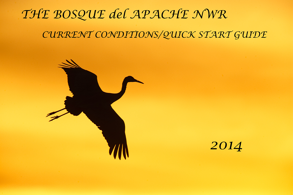 update-cover-_y7o0951-bosque-del-apache-nwr-san-antonio-nm-copy