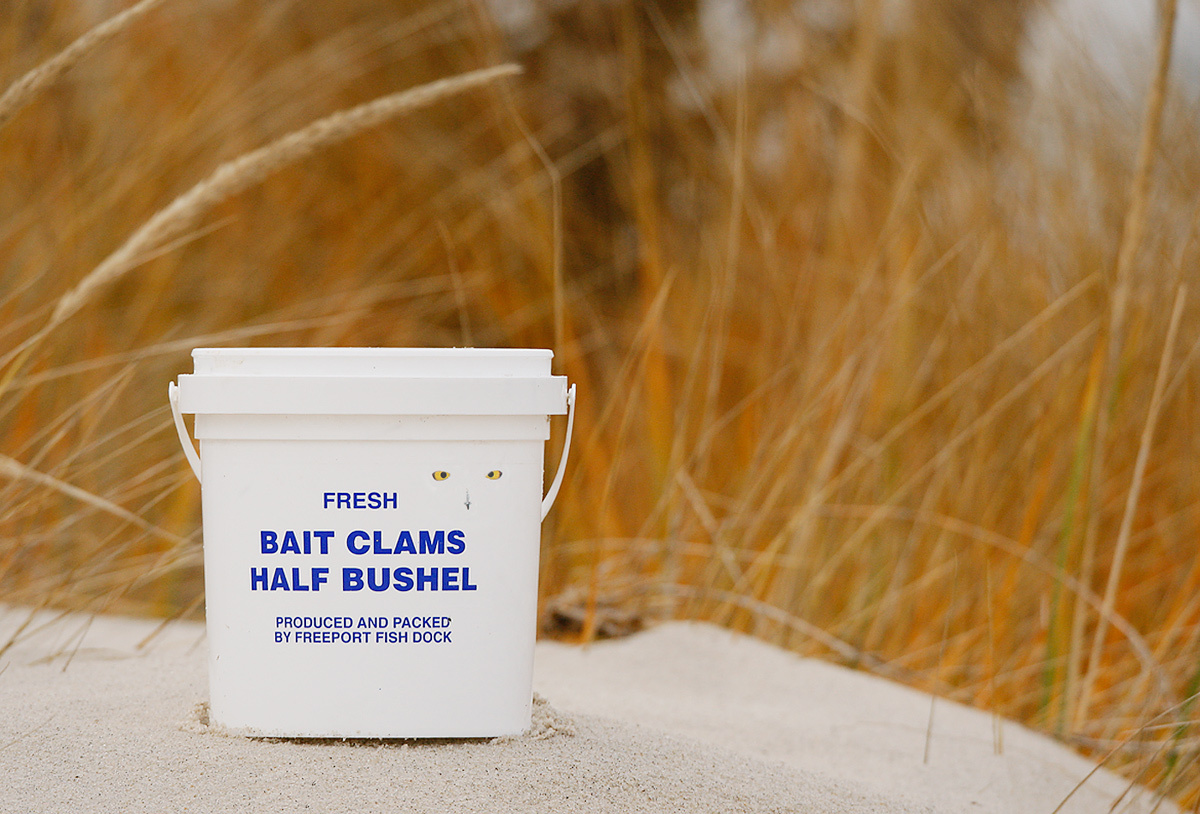bait-bucket-snwy-owl-_d4i0490-jones-beach-state-park-li-ny