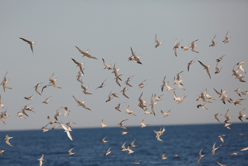 a1c7083-great-gull-island-project-new-york