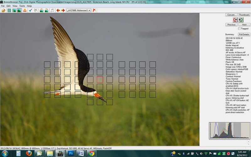 black-skimmer-screen-cap-a