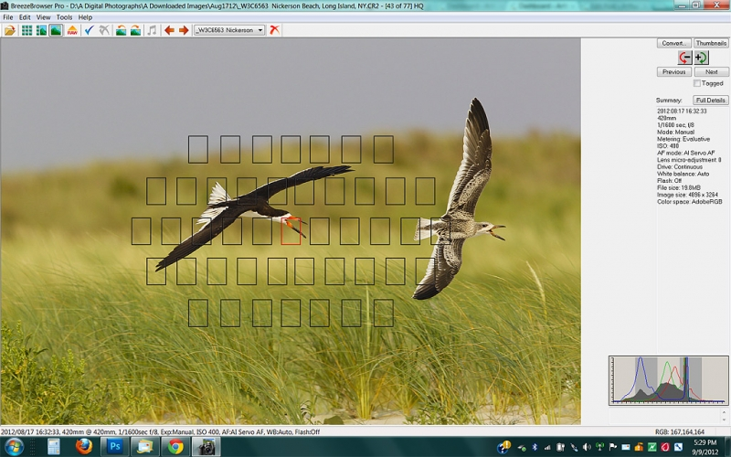 screen-capture-black-skimmer-chase
