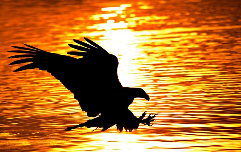 alaska_eagles_ds7_2483m