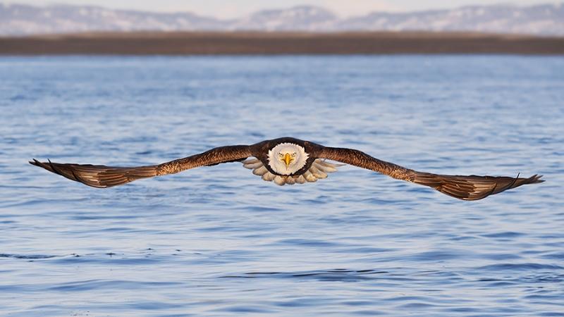 alaska_eagles_ds7_7766nn