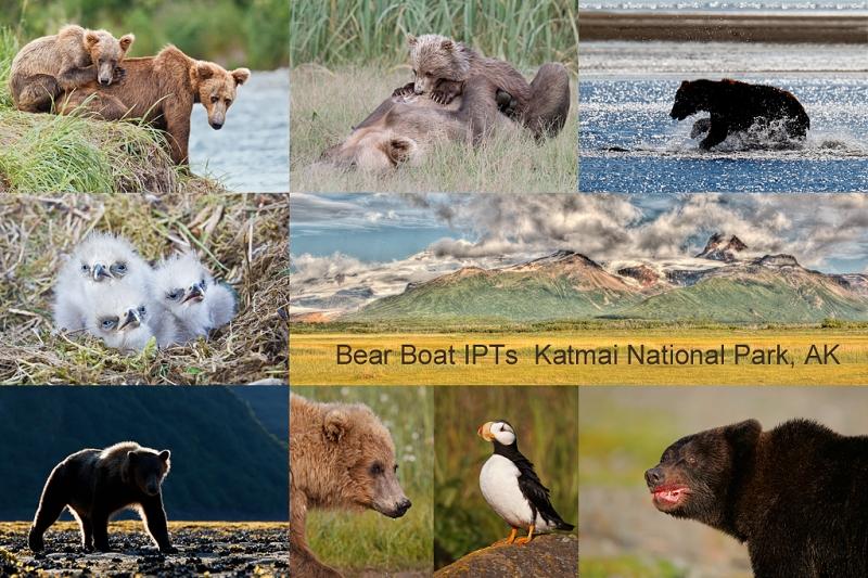 bear-boat-iptflattened