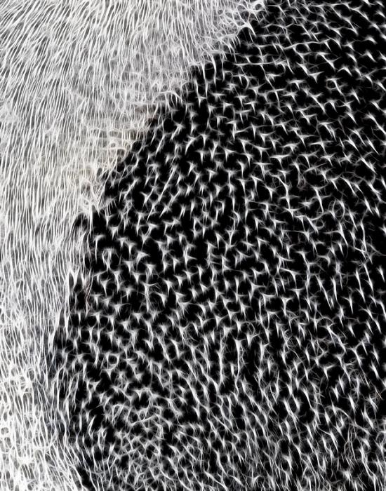 adelie-penguin-plumage-detail-fractalius-_y9c8991-paulet-island-antarctica-copy