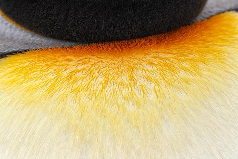 king-penguin-neck-pattern-_w3c9591-st