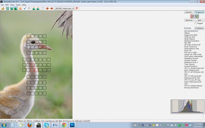 brbr-srn-capt-sandhill-crane-chick