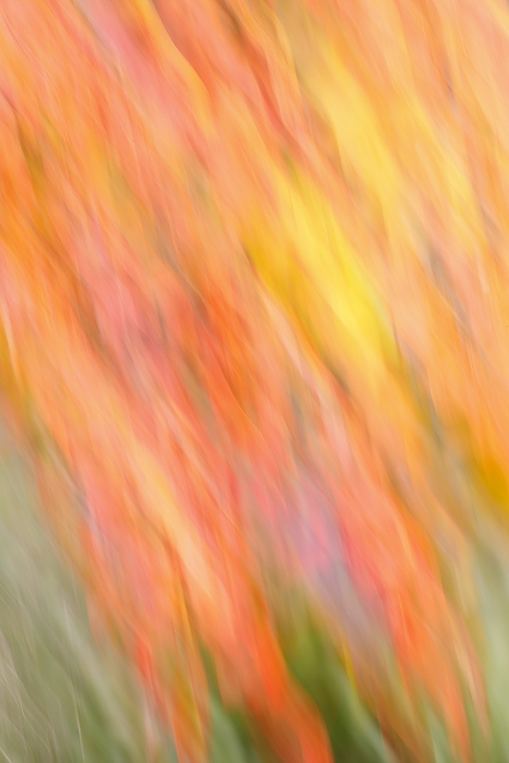 fall-color-blur-_w3c5327-indian-lake-estates-fl