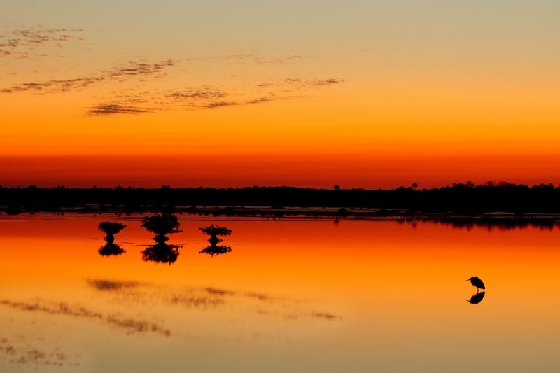 great-blue-heron-gold-orange-sunrise-silh-w-mangroves-iso-200-1-point-3-sec-_10j5851-merritt-island-nwr-titusville-fl