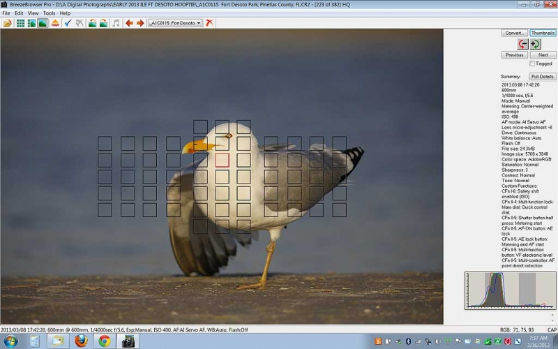 herring-gull-screen-capture-af-active