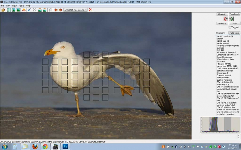 herring-gull-screen-capture-rear-focus-and-re-compose