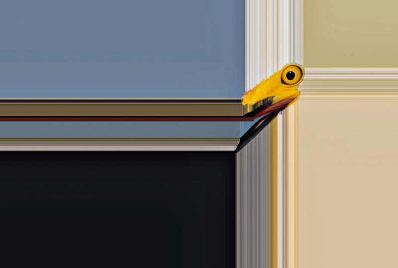 snowy-egret-framing-effect