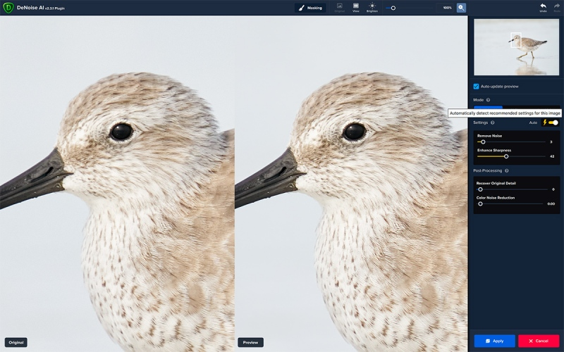 1_Red-Knot-DeNoise-1