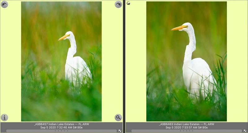 2-Great-Egret-RAWs