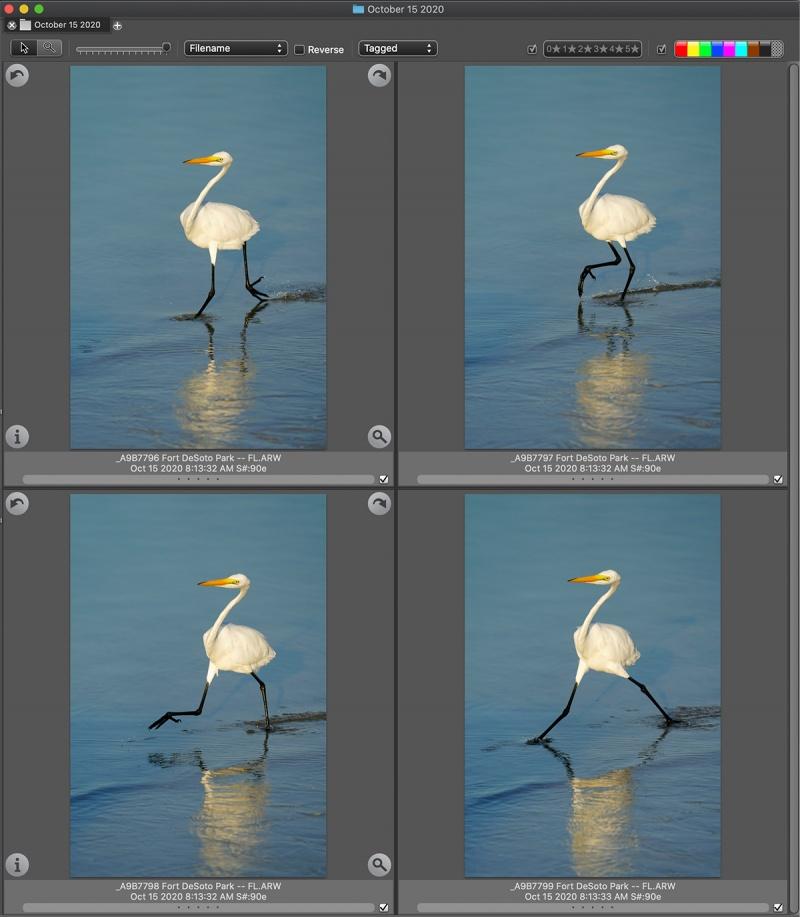 4-great-egrets-Ph-Mech-SQ-1