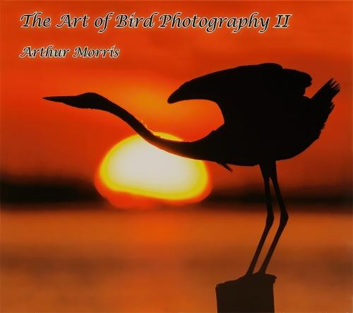 ABP-II-COVER-IMG_5584-ILE-FL