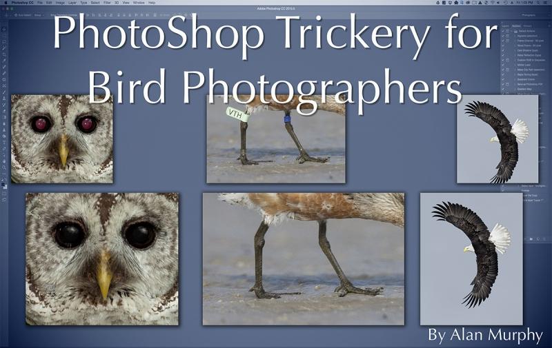 Alan-M-photoshop-trickery-for-bird-photographers