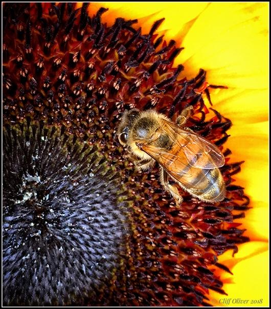 Bee144dpi