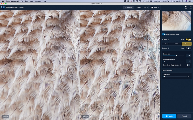 Br-Pel-feather-detail-sharpen-AI-1