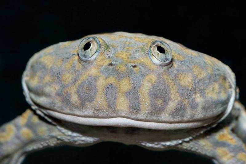 Budgetts-Frog_5962