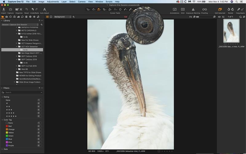 C-1-wood-stork