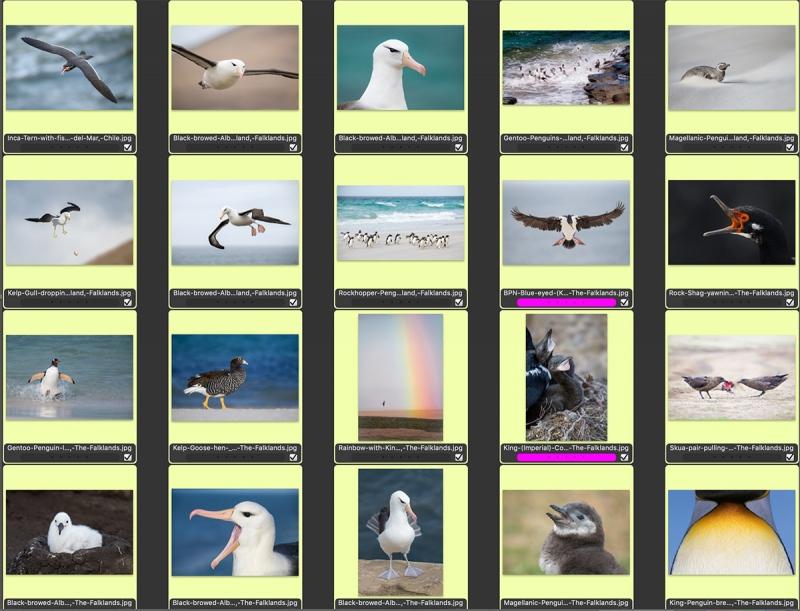 Falklands2019COMPOSITEa