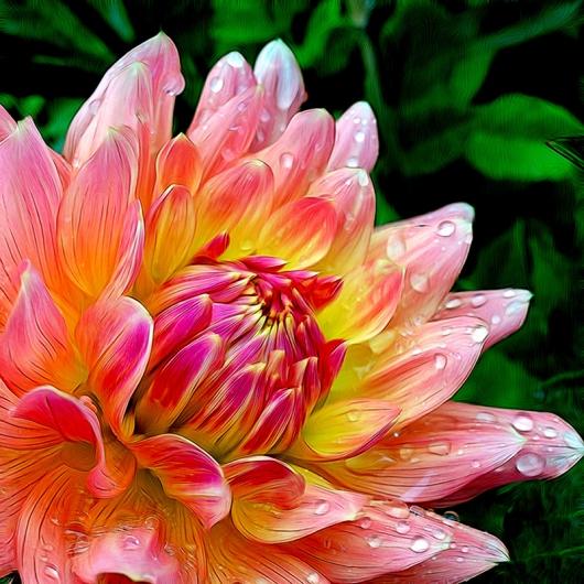 Hollyhockgardenflower144dpi