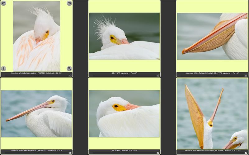 Lakeland-Whitee-Pelicans-1