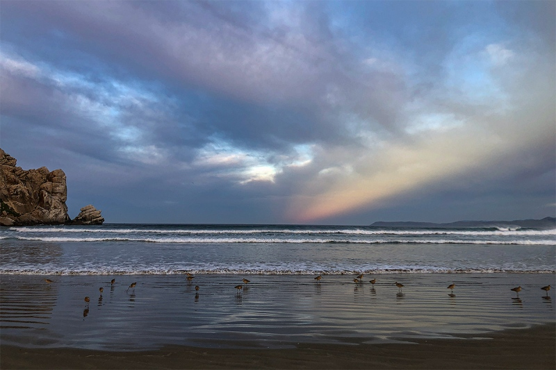 Morro-Rock-Beach-with-curlews-IMG_0584