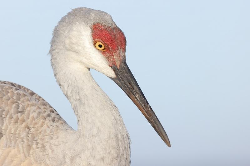 Mothers-Day-crane-colt-at-7-1-2-months-_Q5A8913-Indian-Lake-Estates-FL